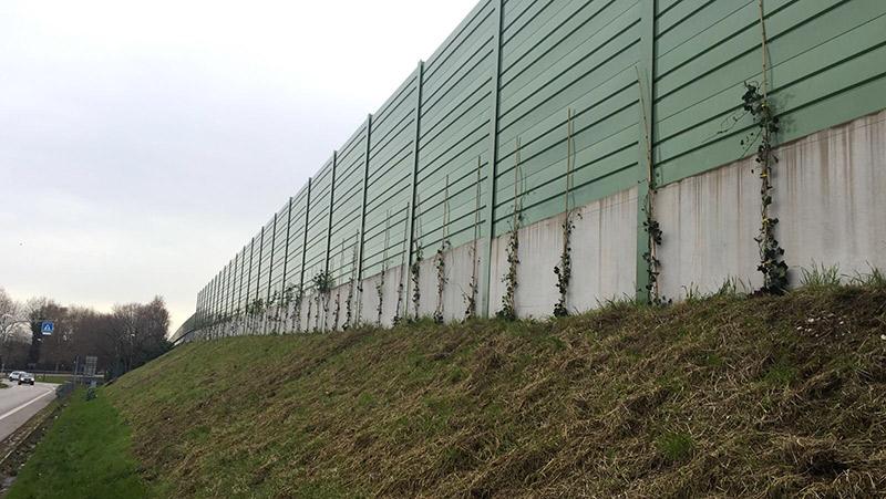 green_wall-2
