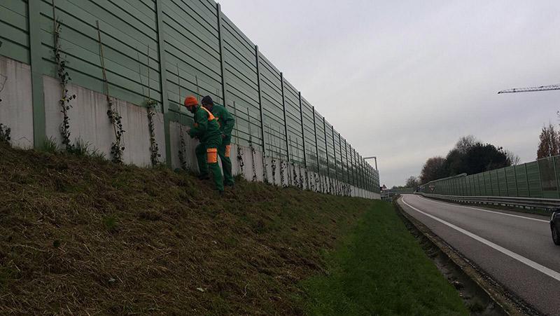 green_wall-3